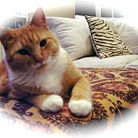 Adopt A Pet :: Meow - Monroe, NC