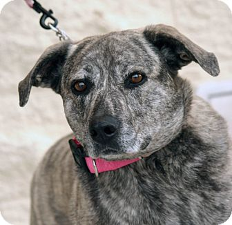 Shepherd (Unknown Type) Mix Dog for adoption in Palmdale, California - Gerdy