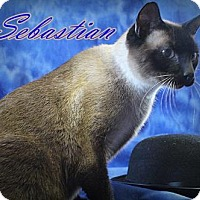 Adopt A Pet :: Sebastian - Mackinaw, IL