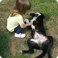Adopt A Pet :: Kobe-pending adoption - Manchester, CT