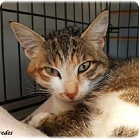 Adopt A Pet :: Mercedes - Welland, ON