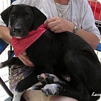 Adopt A Pet :: Lucy - Toms River, NJ