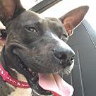 Adopt A Pet :: Lucky Girl