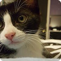 Adopt A Pet :: Wasabi - Rocklin, CA