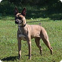 Adopt A Pet :: Nova - Lebanon, MO