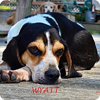 Adopt A Pet :: WYATT - Ventnor City, NJ