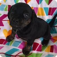 Adopt A Pet :: Lisa - Gallatin, TN