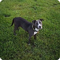 Adopt A Pet :: Tina - Mobile, AL