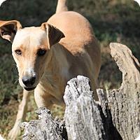 Adopt A Pet :: Titus - Marion, NC