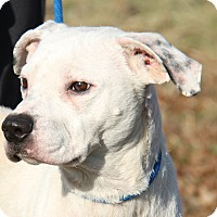 Adopt A Pet :: Speck (Neutered) - Marietta, OH