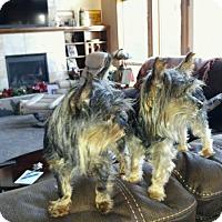 Adopt A Pet :: Lucia and Luca - McKenna, WA