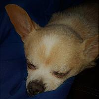 Adopt A Pet :: Nugget - Bucks County, PA