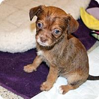 Adopt A Pet :: 'PEBBLES' - Agoura Hills, CA