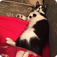 Adopt A Pet :: Georgia - Tampa, FL