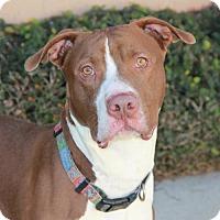 Adopt A Pet :: Clifford (CP) - Fremont, CA