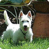 Adopt A Pet :: Winston - Omaha, NE