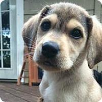 Adopt A Pet :: Rocki - Austin, TX