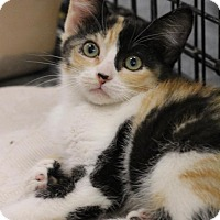 Adopt A Pet :: Willa - Sacramento, CA