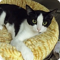 Adopt A Pet :: Amerie - Byron Center, MI