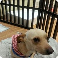 Adopt A Pet :: Brando - Valencia, CA