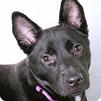 Adopt A Pet :: Riley - Sudbury, MA