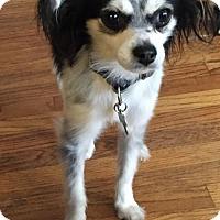 Adopt A Pet :: Devon - Costa Mesa, CA