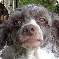 Adopt A Pet :: Razz - Crump, TN