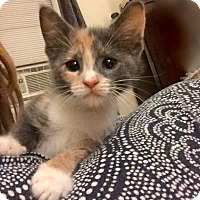 Adopt A Pet :: Cathy - Long Beach, NY
