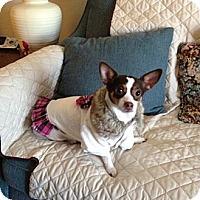 Adopt A Pet :: Tasha - Schaumburg, IL
