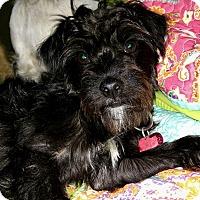 Adopt A Pet :: Lucky - Rocky Hill, CT