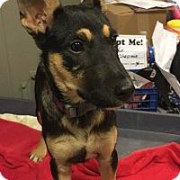 Adopt A Pet :: Venus - Matawan, NJ