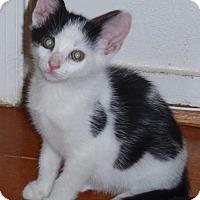 Adopt A Pet :: bitsy - Centreville, VA