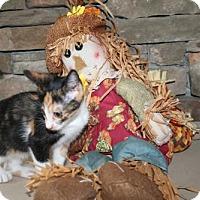 Adopt A Pet :: Stina (& Rollo) - Herndon, VA