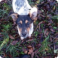 Adopt A Pet :: lucus - Kendall, NY
