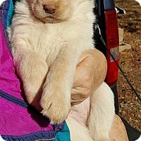 Adopt A Pet :: Baby Girl Boo - Baileyton, AL