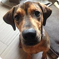 Adopt A Pet :: Corbin - Grafton, WI