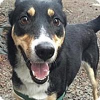 Adopt A Pet :: Ziggy - Surrey, BC