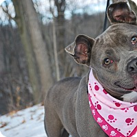 Adopt A Pet :: Heidi - New Castle, PA