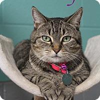 Adopt A Pet :: Molly - Bradenton, FL