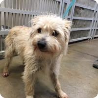 Adopt A Pet :: BRU - Elk Grove, CA
