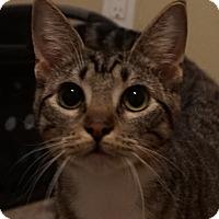 Adopt A Pet :: Gertrude (super sweet!) - Houston, TX