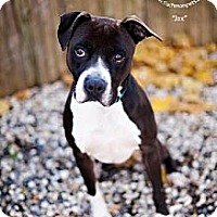 Adopt A Pet :: Jax - New Canaan, CT
