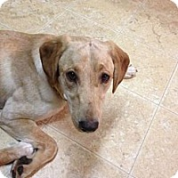 Adopt A Pet :: Mynx - Cumming, GA