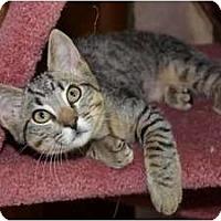 Adopt A Pet :: Reno - Davis, CA