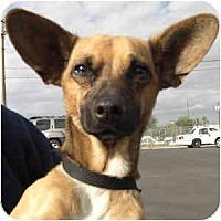 Adopt A Pet :: Ethan - Phoenix, AZ