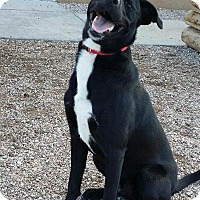 Adopt A Pet :: Jasper - Cedar City, UT
