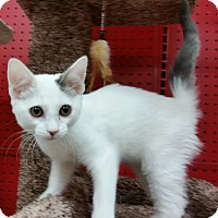 Adopt A Pet :: Eclipse - Phoenix, AZ