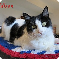 Adopt A Pet :: Addison - Xenia, OH