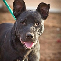 Adopt A Pet :: Parker - Post, TX