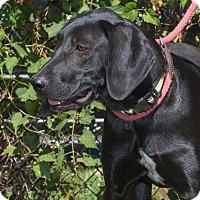 Adopt A Pet :: Mercer - Elmwood Park, NJ
